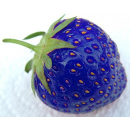 Bonsai Gorąca Sprzedaży 100 sztuk/worek Niebieski Truskawki Rzadkich Roślin Owocowych Domu Ogród