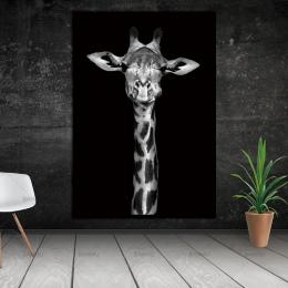 Top sprzedaży zwierząt płótnie malarstwo Ścienne sztuki Obraz do Salonu Sztuki plakat Dekoracje Obraz Bez Ramki morden ściany dr