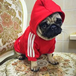 Jesień Zima Pies Ubrania Bawełna Puppy Dog Odzież Dla Psów Kapturem XS-2XL Zwierzęta Płaszcze Zwierzaki Produkty Ropa Perro Fran