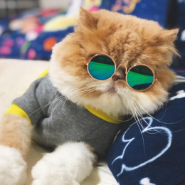 Pet Cat Okulary Okulary Pet Products Dog Dla Małych Psów Cat Eye-nosić Okulary Zdjęcia Rekwizyty Akcesoria Dla Psów Pet materiał