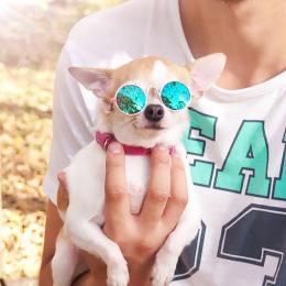 Pies Kot Pet Okulary Okulary Piesek Oko-zużycie Zdjęcia Rekwizyty Akcesoria Pet Supplies Dog cat Dla Produktów Domowych kot Okul