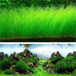 Fish Tank Akwarium Nasiona Roślin Wodnych Wody Trawy Decor Rock Trawnik Ogród Foreground Roślin