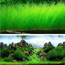 Akwarium Krajobrazu Trawa Ornament wodne Wody Mini Liść Żywo Roślin Fish Tank Dekoracji Domu Graden B888